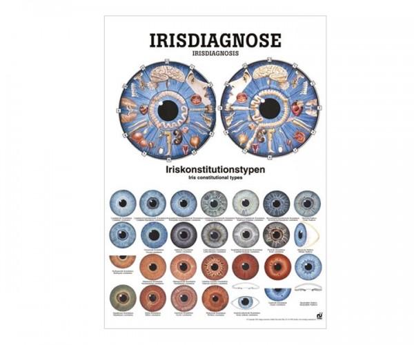 Lehrtafel Irisdiagnose